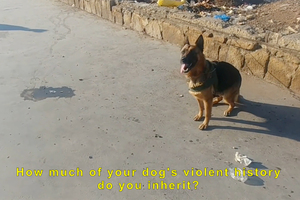Bild:  German Shepherds Need Heroes Too (Videostill)